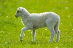 Walking in the field Stock Image