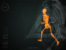Walking fire skeleton by X-rays on backgroun. 3d illustration of  walking fire skeleton by X-rays on background Stock Image