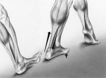 Walking Foot Strikes. Illustration of how a walking foot strikes the ground. Shown are three stages: 1) before the foot strikes the ground, the rounded arch is royalty free stock photo