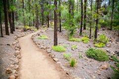 Walking footpath in the beautiful mountain forest. Near Vilaflor village, Tenerife, Spain Stock Image