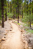 Walking footpath in the forest near Vilaflor Stock Images