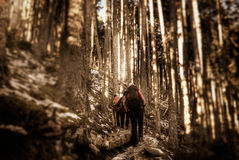Walking in the forest Royalty Free Stock Photography