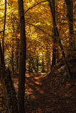 Walking in the forest. In autumn Stock Photo