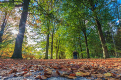Walking through the forest in autumn Royalty Free Stock Images