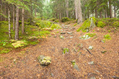 Walking into the forest long a path in a cloudy day. No people aroud Royalty Free Stock Photo