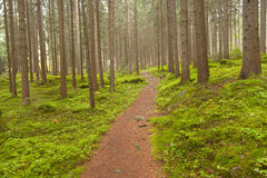 Walking into the forest long a path in a cloudy day. No people a Royalty Free Stock Image