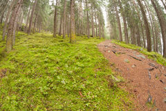 Walking into the forest long a path in a cloudy day. No people a Royalty Free Stock Photo
