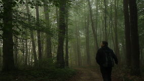 Walking in forest stock video footage