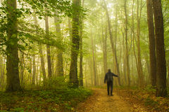 Walking in forest Royalty Free Stock Images