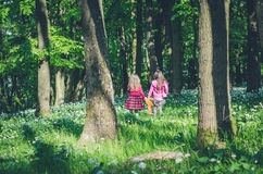 Walking the the forest Royalty Free Stock Images