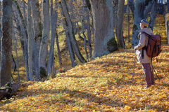Walking in forest Stock Photography