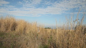 Walking forward in dry grasses Stock Photography