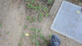 Walking in garden stock video