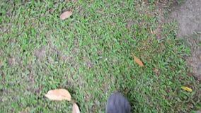 Walking in garden stock footage