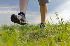 Walking on grass, exercise outdoors. Man walking on green summer grass Stock Image