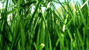 Walking in grass stock video footage