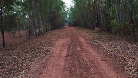 Walking on gravel path in forest.  stock video footage