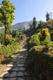 Walking in the green outskirts of the Annapurna track Royalty Free Stock Photo