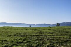 Walking in Green Pasture Stock Photography
