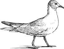 Walking gull Royalty Free Stock Images