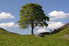 Walking Hadrians Wall. Hadrians Wall (Roman remains) Northumberland England UK Stock Images