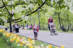Walking happy people, families with children in park with tulips, flowers of sakura, cherry, apple blossoms, sunny day Stock Image
