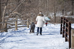 Walking with her dog Stock Photography