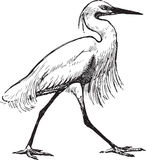 Walking heron stock illustration