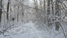 Walking on a hidden path in the snow covered forest in winter stock video footage