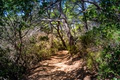 Walking paths of Porquerolles island, Cote d`Azur, France stock photos