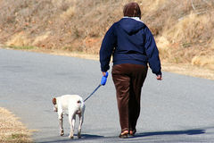 Walking His Human. Woman walking her pet on a sunny winter day stock photos