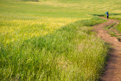 Walking through holms oaks and green wheat fields Royalty Free Stock Image