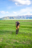 Walking horse on a green meadow Royalty Free Stock Images