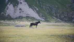 Walking Horse. The horse moves slowly against the background in Altay mountains. Walking Horse. The horse moves slowly against the background in mountains stock footage