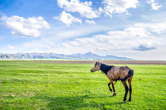 Walking horse - landscape of green field Stock Photo