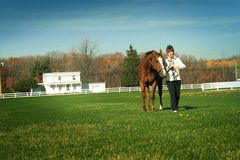 Walking horse in meadow Stock Photos