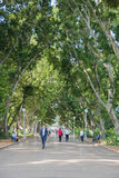 Walking Hyde Park Royalty Free Stock Images