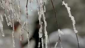 Walking Through The Icy Forest stock video footage