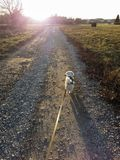 Walking and Keeping a dog on a leach stock image