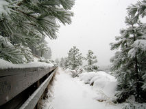 Walking at Lake Tahoe in the snowstorm. A walking path along Lake Tahoe shore in the snowstorm. Snow and snowflakes everywhere Royalty Free Stock Photos