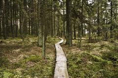 Walking lane of boards in forest Royalty Free Stock Image