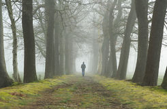 Walking in a lane. Man walking alone in a lane on a foogy, spring morning stock photography