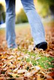Walking in leaves. Woman's legs walking through the leaves of fall Royalty Free Stock Image
