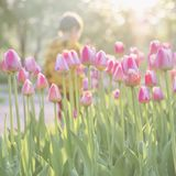 Walking little child in park with blooming pink tulips on foreground. Sunny day. Blurred abstract image for spring stock photos