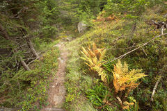 Walking long a mountain path at fall in the woods Stock Photography