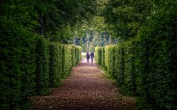 Walking through lush greenery. Couple is walking in the end of the path among lush greenery stock photos