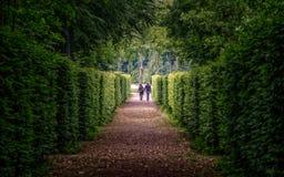 Walking through lush greenery Stock Photos