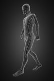 Walking man radiography. Made in 3D Royalty Free Stock Photos