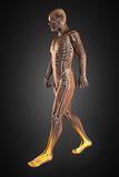 Walking man radiography. Made in 3D Royalty Free Stock Images