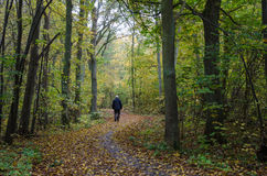 Walking man at a winding footpath at autumn Royalty Free Stock Image